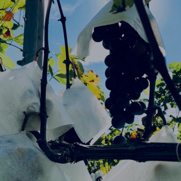緊急事態宣言延長に伴う、時短営業・酒類提供自粛のお知らせ(8/23〜9/12)