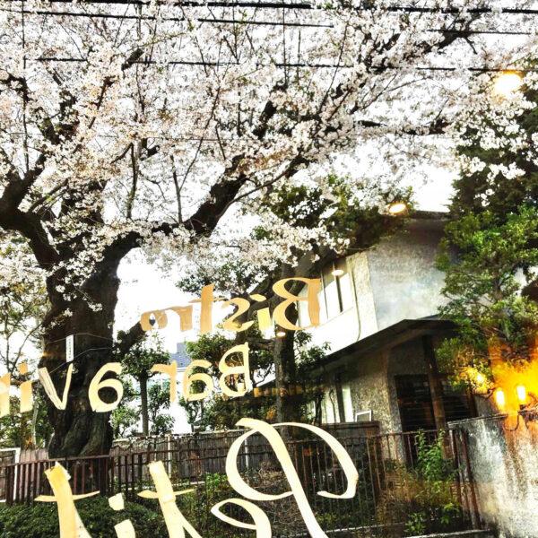 桜、眺める特等席のご予約承ります